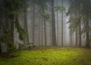 pine-273826_1920