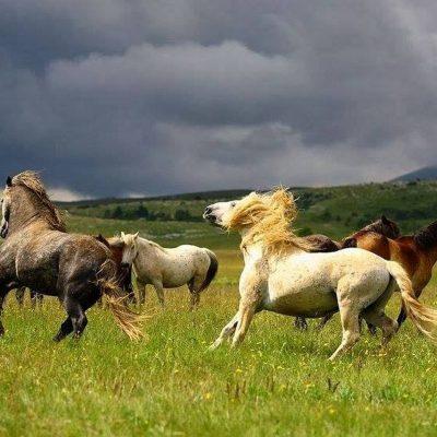 wild horses Bosnia