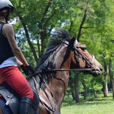 zobhtica horse farm north serbia
